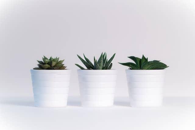 tri male izbove rastliny v bielych kvetinacoch